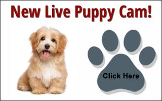 puppy-cam