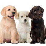 puppy adoption San Diego